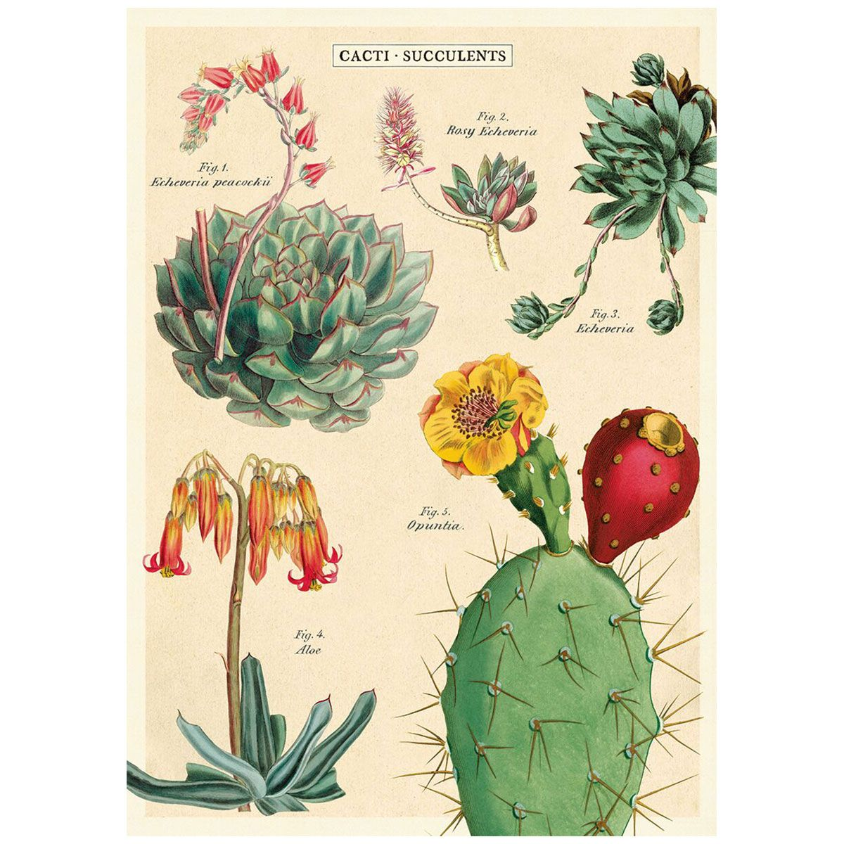Cavallini Botanica Wrapping Paper Decoupage Poster High Quality