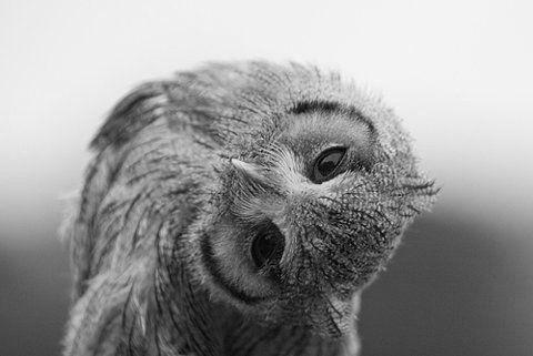 eule owl   Tumblr
