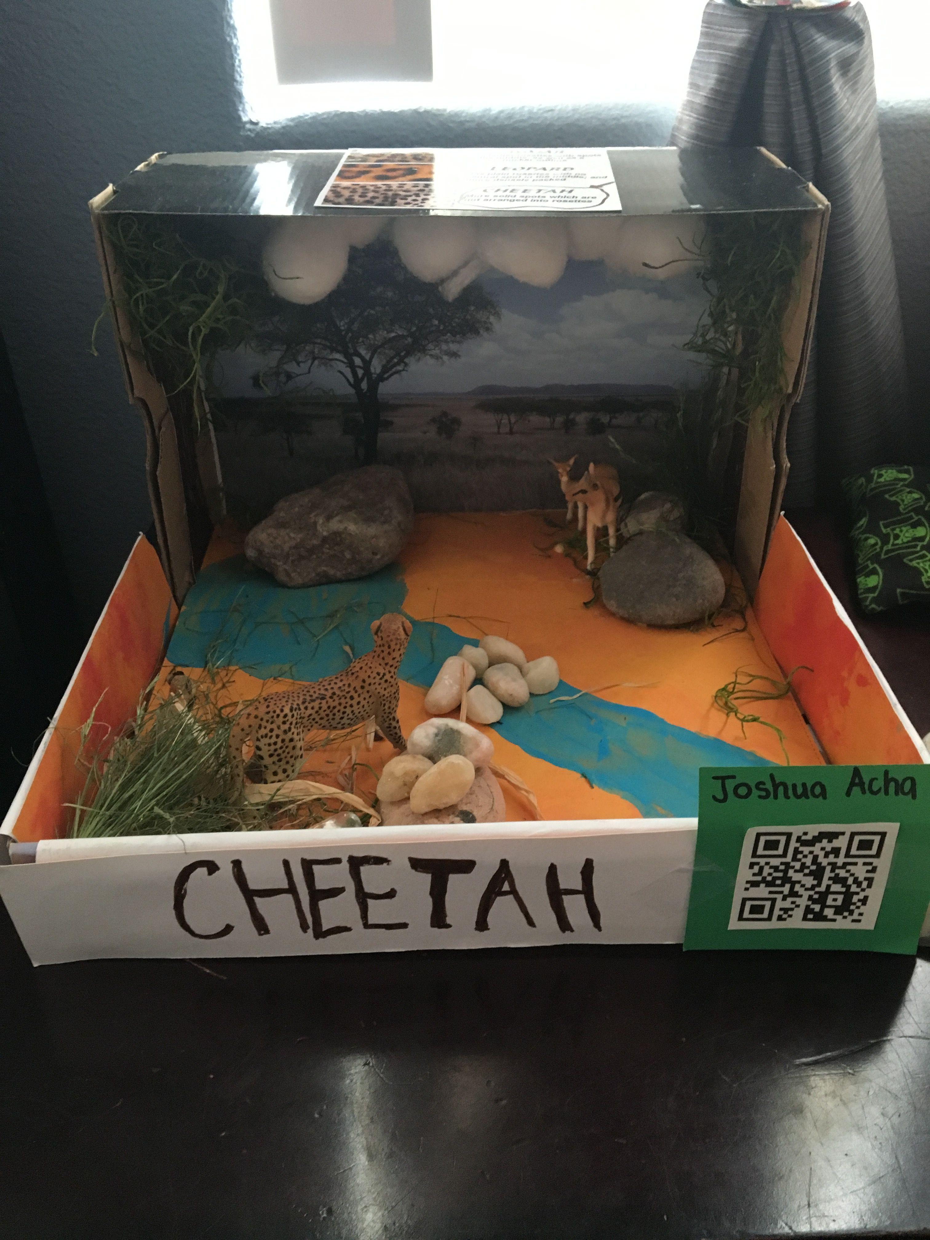 1st Grade Cheetah Diorama Diy