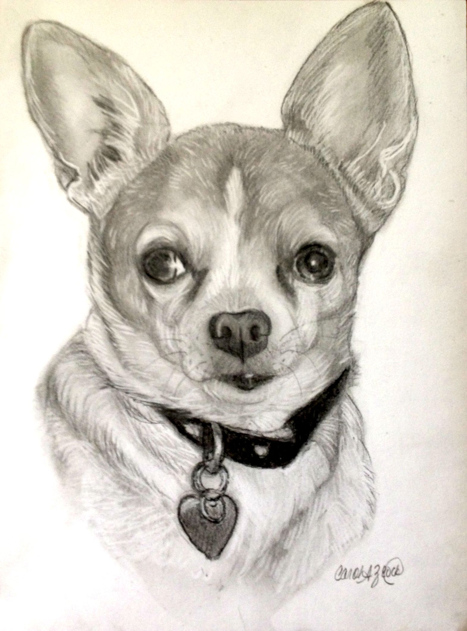Chihuahua Commission Done In Graphite And Charcoal Animal Photography Chihuahua Chihuahua Dogs [ 2120 x 1570 Pixel ]