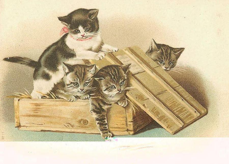 Винтажные картинки с котятами, картинки слез русском