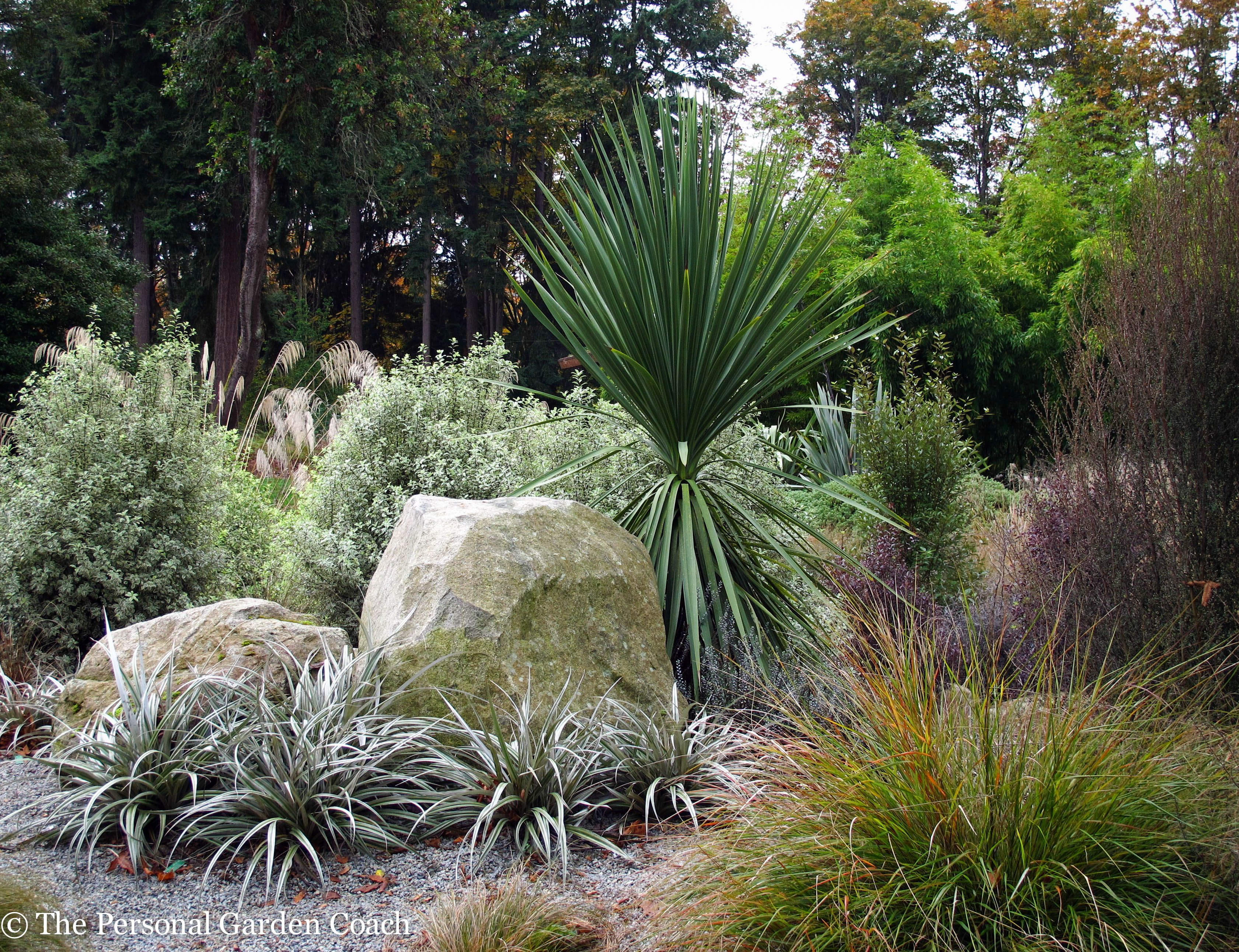 Posts about Seattle on Fine Foliage Native garden