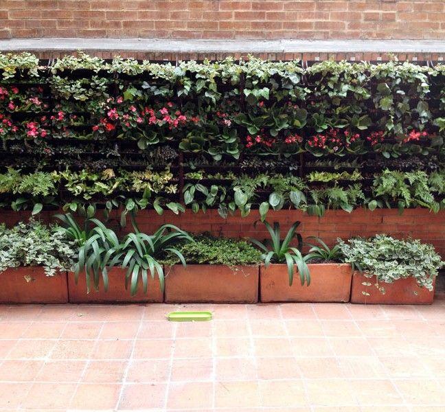 plantas que se pueden utilizar en jardines verticales