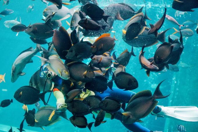 日本で一番標高の高い箱根園水族館へ アザラシや海中ショーを楽しもう 海中 アザラシ 珍しい魚
