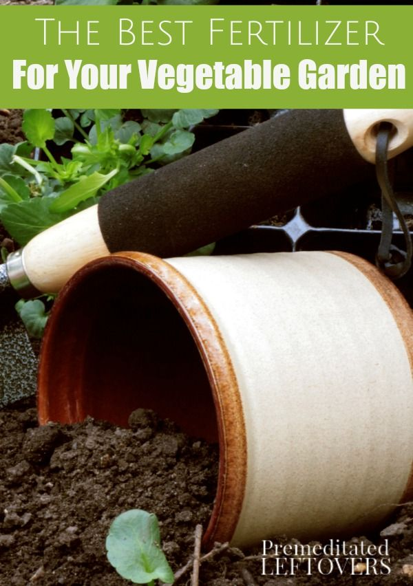 The Best Fertilizer For Your Vegetable Garden Learn How 400 x 300