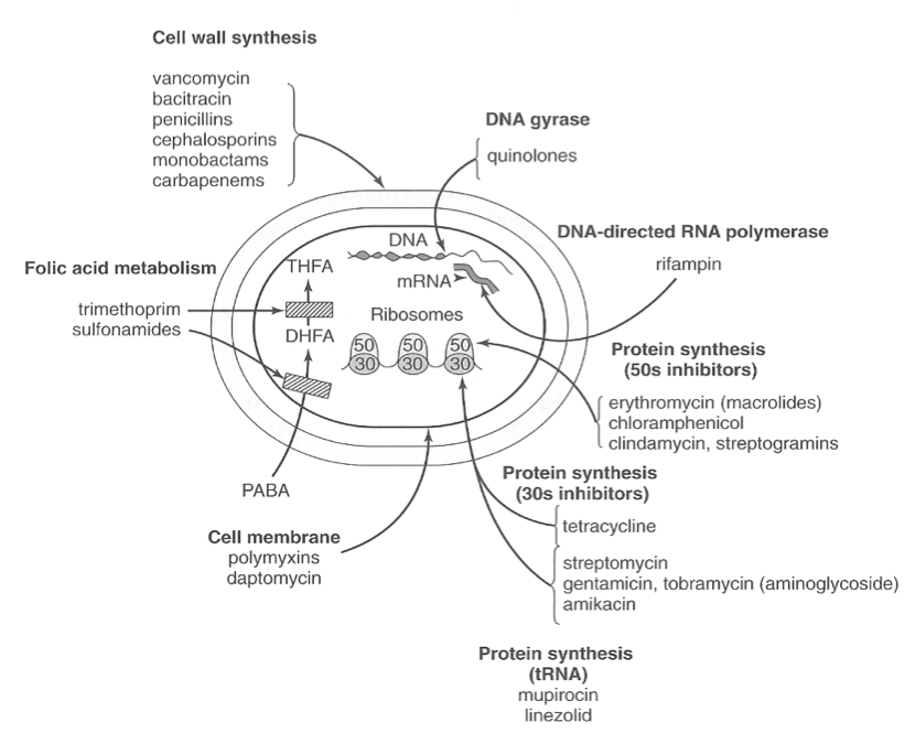 Antibiotc MOA Cell wall, Cell membrane, Protein synthesis