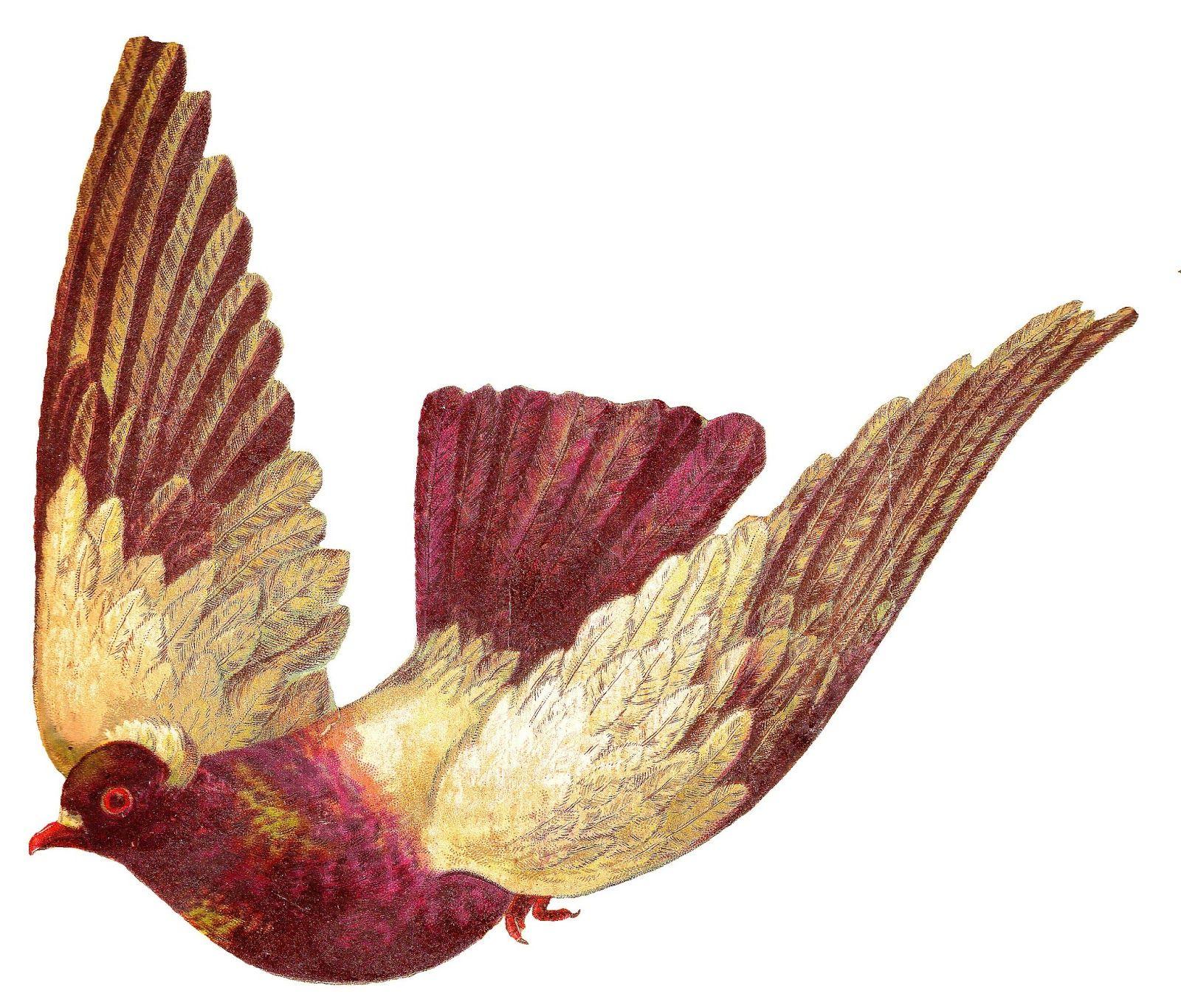 Antique Images: pigeon