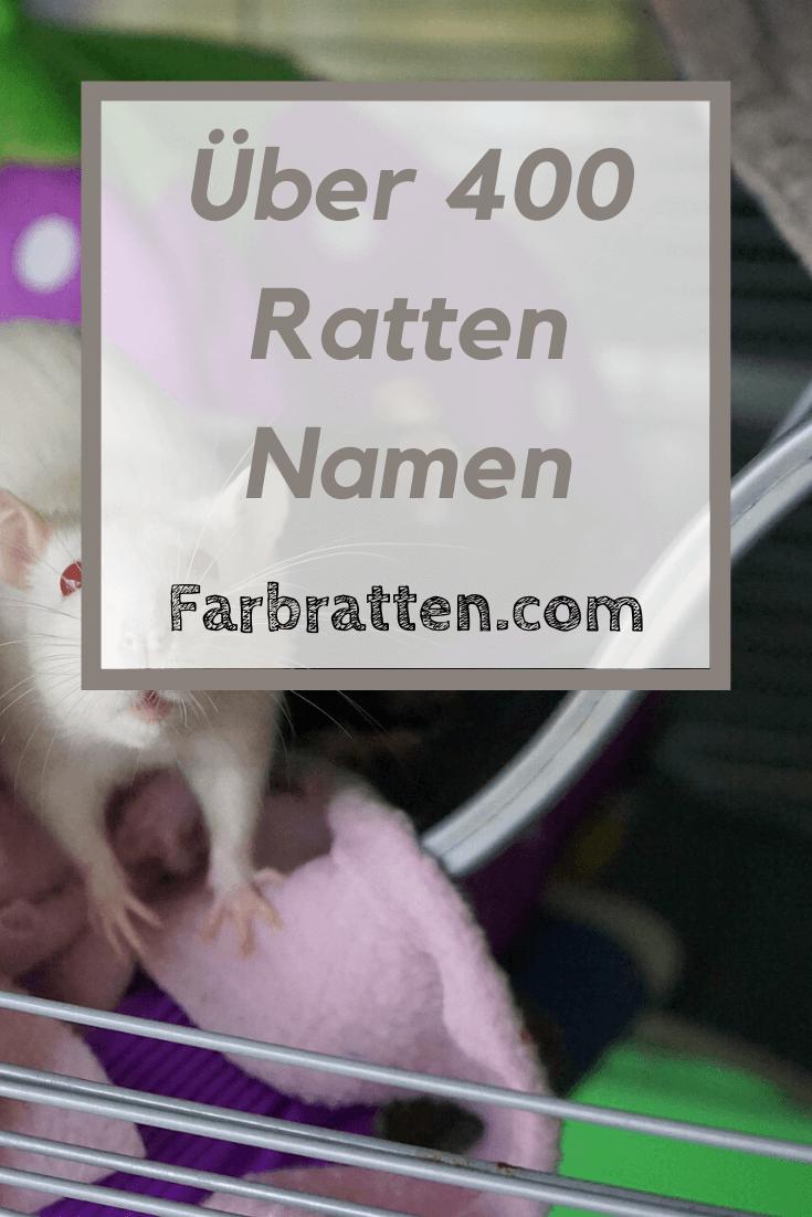 Ratten Namen Uber 400 Fur Weibchen Und Mannchen In 2020 Ratten Farbratten Ratten Haltung