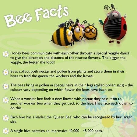 Bee - interesting facts, images & videos | Bees ...