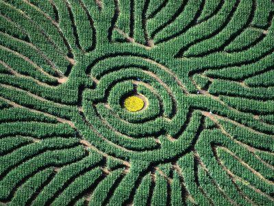 c807be4880f4f22aa5eb4247d4ec8611 - Denver Botanic Gardens Corn Maze Hours