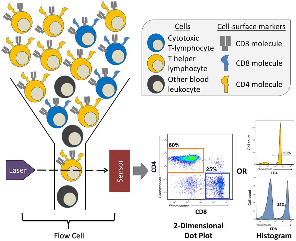 Image Result For Flow Cytometry Imunologia