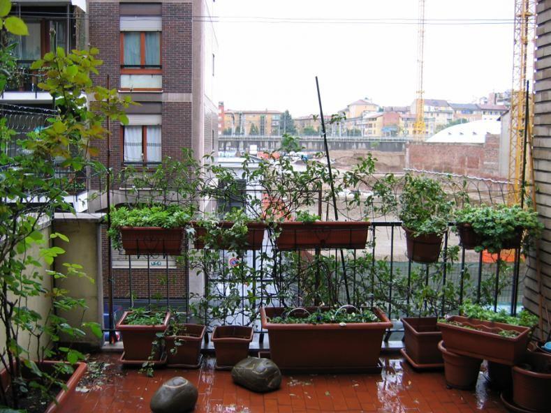 terrazze arredate con piante - Cerca con Google | Terrazze ...