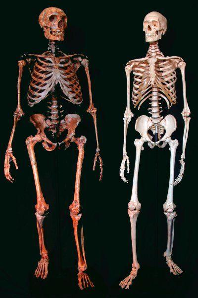 Blass Blond Blauaugig Der Neandertaler Im Modernen Menschen Neandertaler Menschliche Evolution Der Moderne Mensch