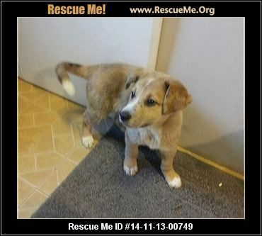 Forever Paws Puppy Rescue Denver In Rescue Animals Family Dog