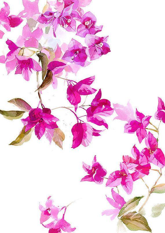 Bougainvillea Watercolor Fuchsia Flowers Bougainvillea