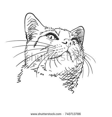 Sketch Of Cat S Head With Long Whiskers Looking Up Hand Drawn Vector Illustration Hand Drawn Vector Illustrations Cat Sketch Whiskers