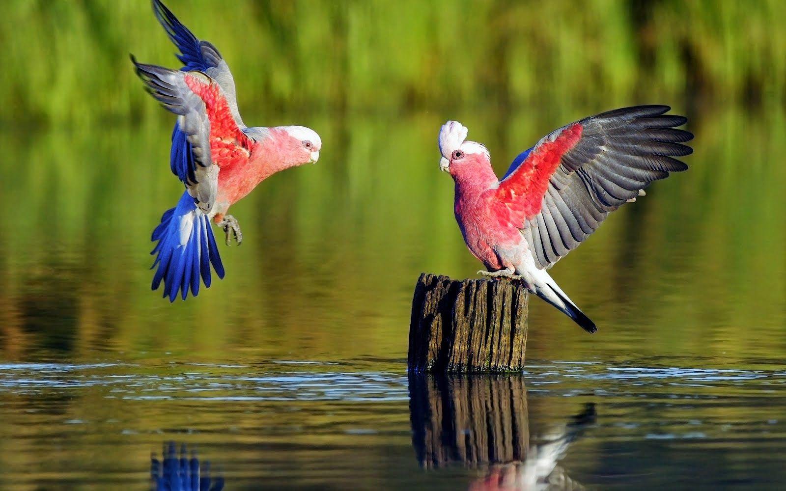 Imagenes De Hermosas Aves Exoticas