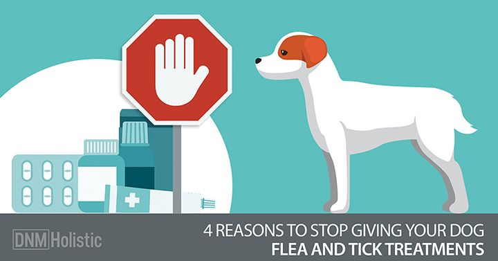4 Natural Flea Amp Tick Repellent Recipes For Your Dog