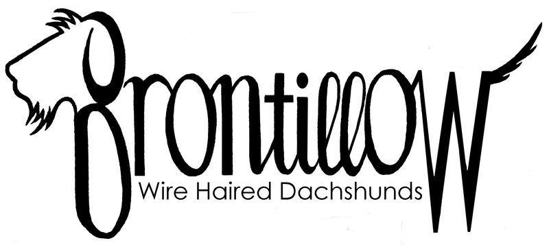 Park Art My WordPress Blog_Wire Haired Dachshund For Sale Kent