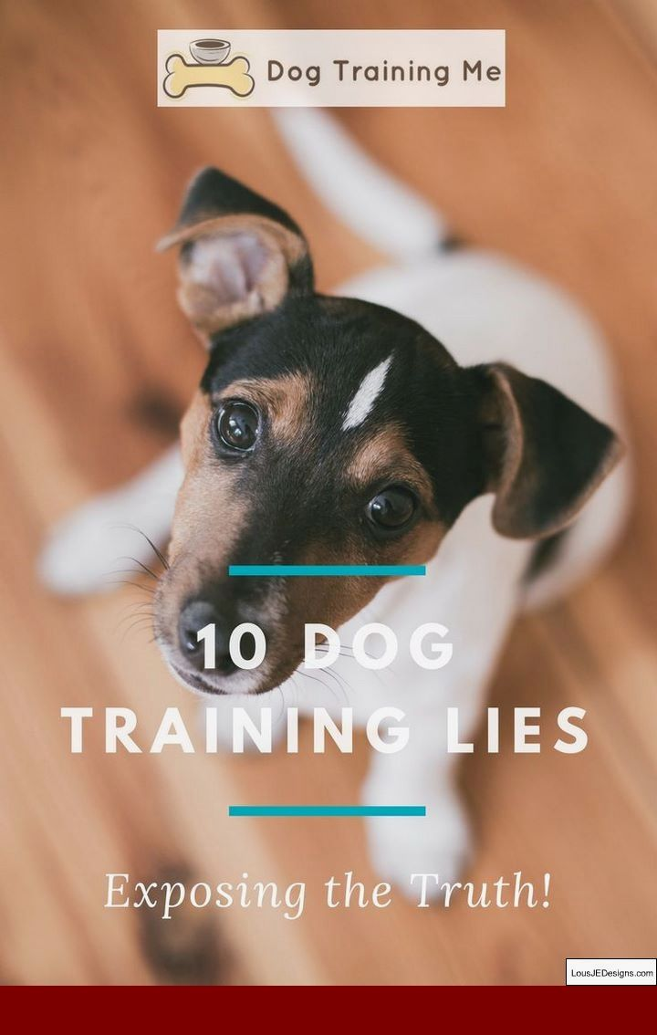 Training Tips For Shy Dogs And Pics Of Train A Dog Not To Bark