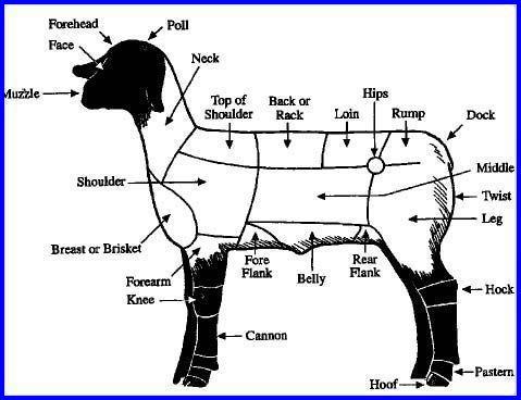 Parts Of A Lamb Lambs Pinterest Walla Walla And Lamb Livestock Judging Katahdin Sheep Livestock