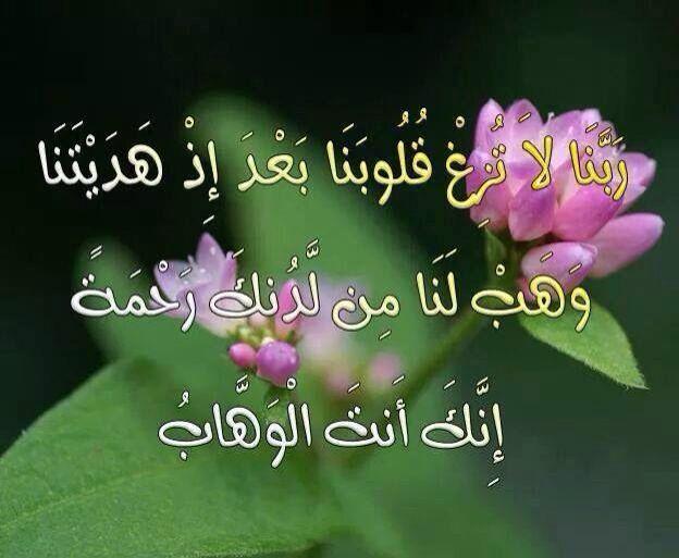 يا وهاب Plants Rose Flowers
