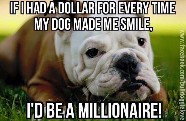 Pin By Erika Vital Saleh On Of My Life Dogs Bulldog Dog Love