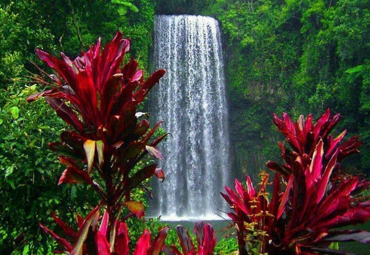 explore beautiful flowers garden and more - Beautiful Flower Gardens Waterfalls