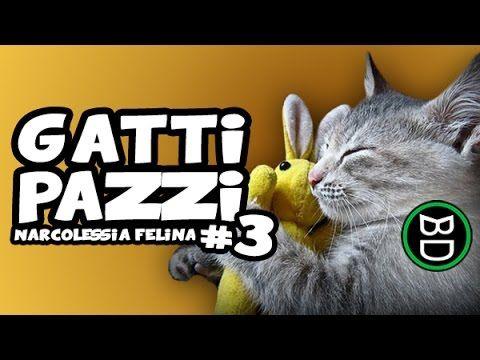 Gatti Pazzi 3 Narcolessia Felina Video Gatti Compilation