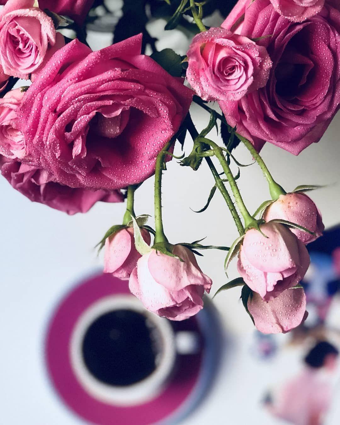 الشتاء صباح الخير فيروز مساء الخير اكسبلور لايك تفاعل خواطر فيروزيات الإمارات شوق العراق فيروزيات المساء قطر شعر الشوق Flowers Plants Rose