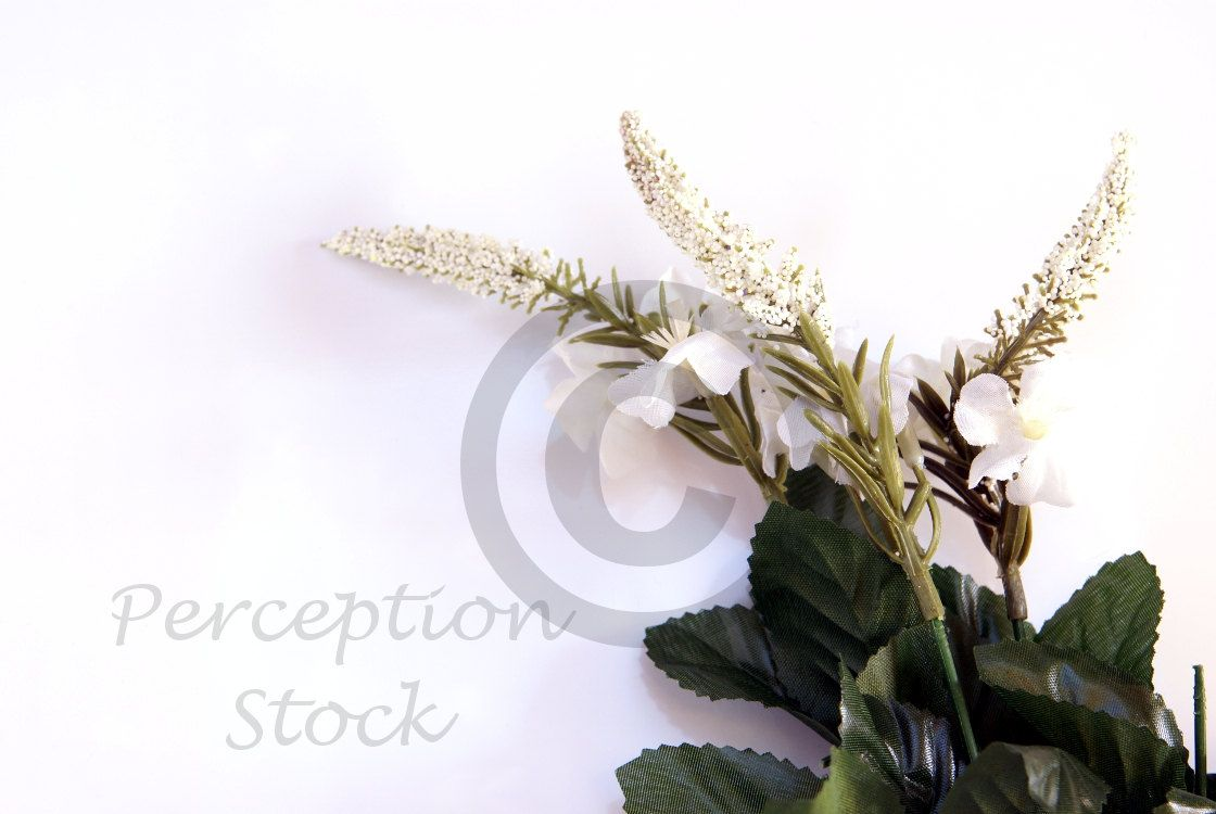 Flowers on White Surface Styled Stock Photo for Advertising Your Shop, Blog and Products. Digital Styled Background Photography by PerceptionStock on Etsy