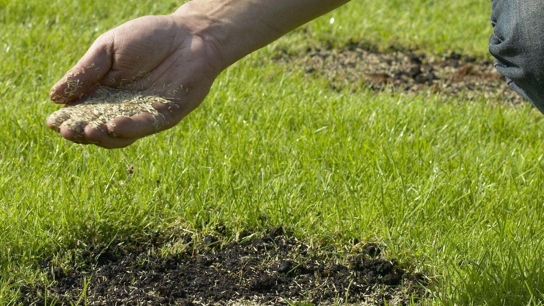 Pin Auf Rasen