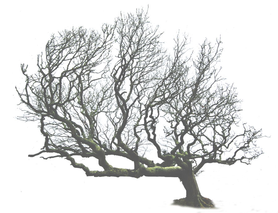 Leaning Tree Leaning Tree Png By Alzstock On Deviantart Tree Winter Trees Tropical Tree