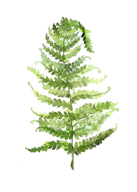 Green Fern Leaf Printable Botanical Watercolour Fern Leaf