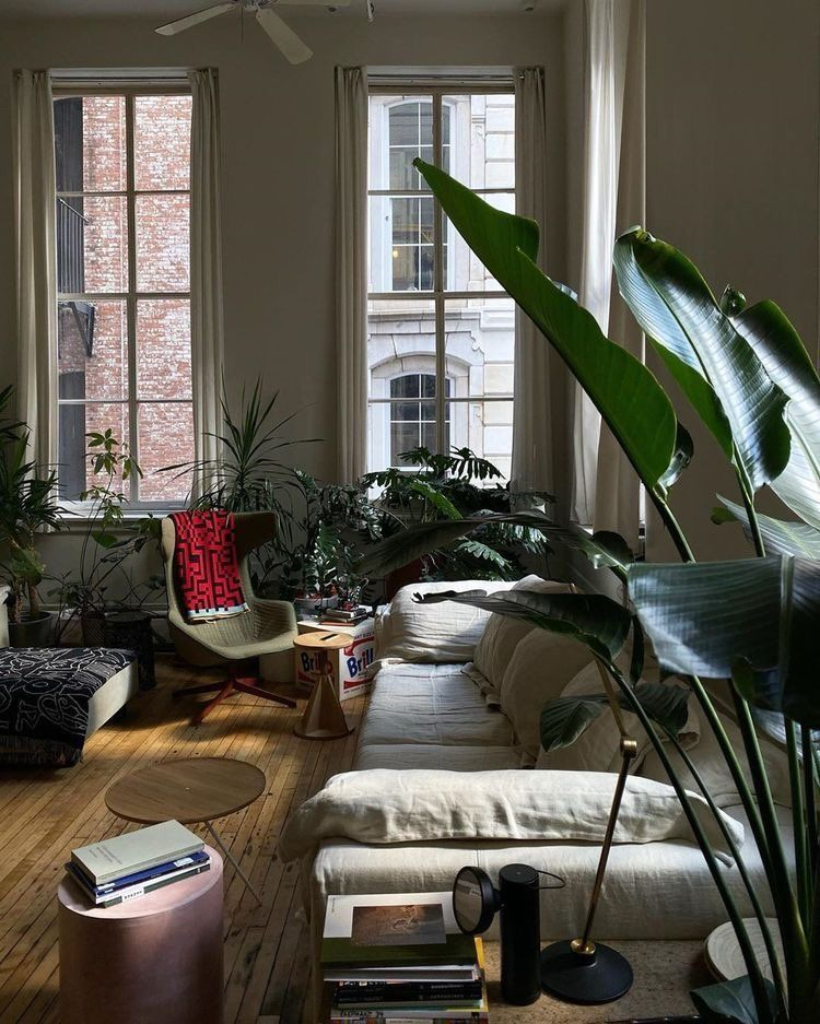 mid century modern bohemian living room houseplants big windows - Alice Davis