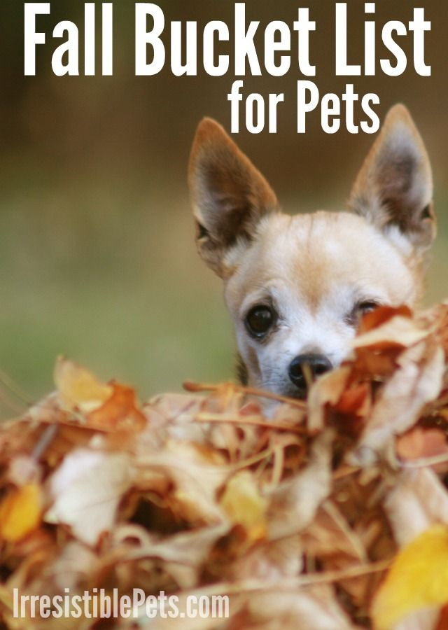Fall Bucket List For Pets Printable At Irresistiblepets Com Fall