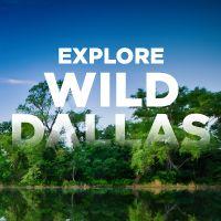 Explore Wild Dallas | D Magazine