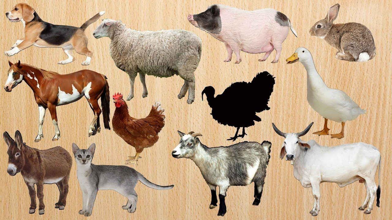 10++ Animal farm pig names ideas in 2021