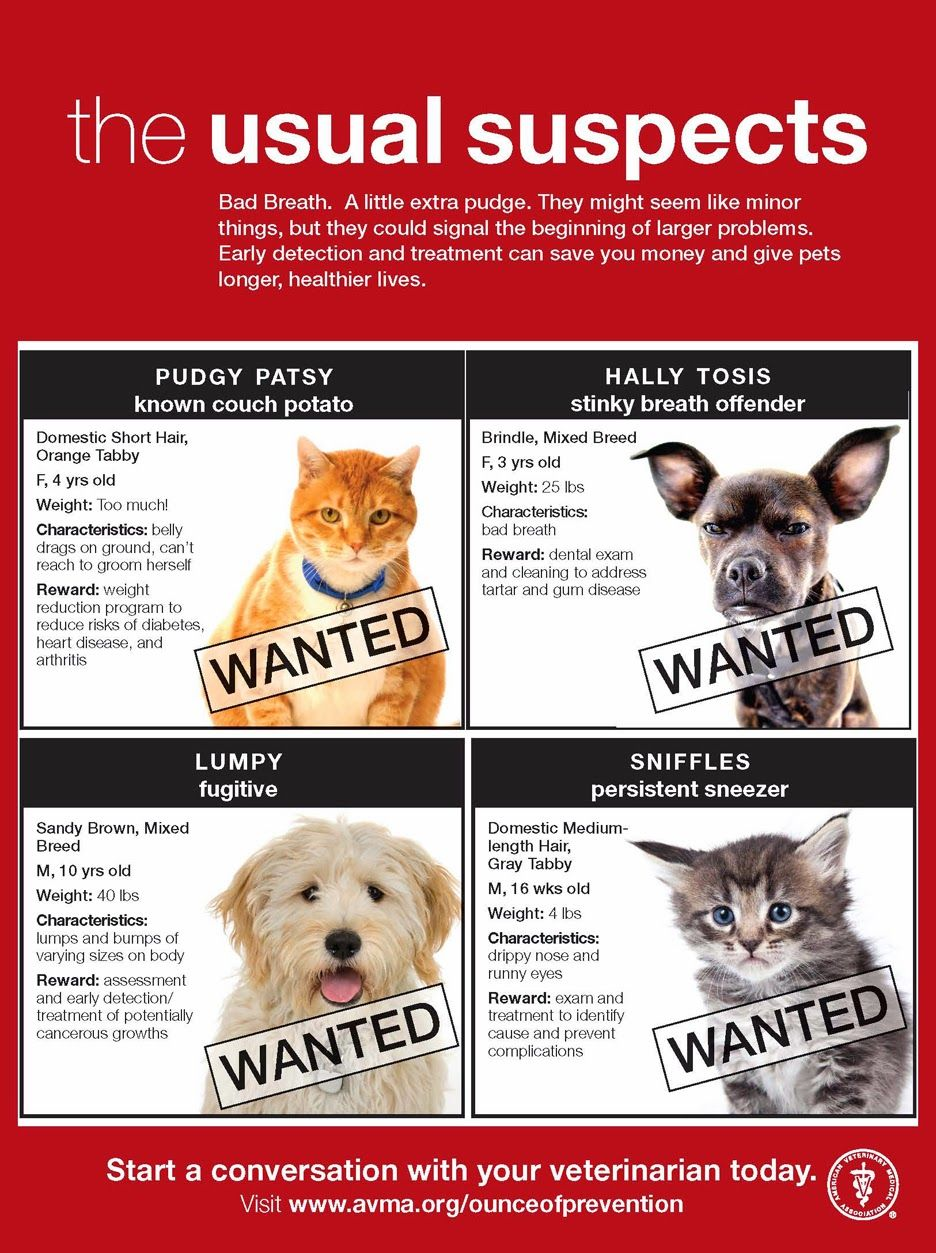 Time For Poodles And Friends Be On The Look Out For These Culprits Pets Preventative Health Feline Health