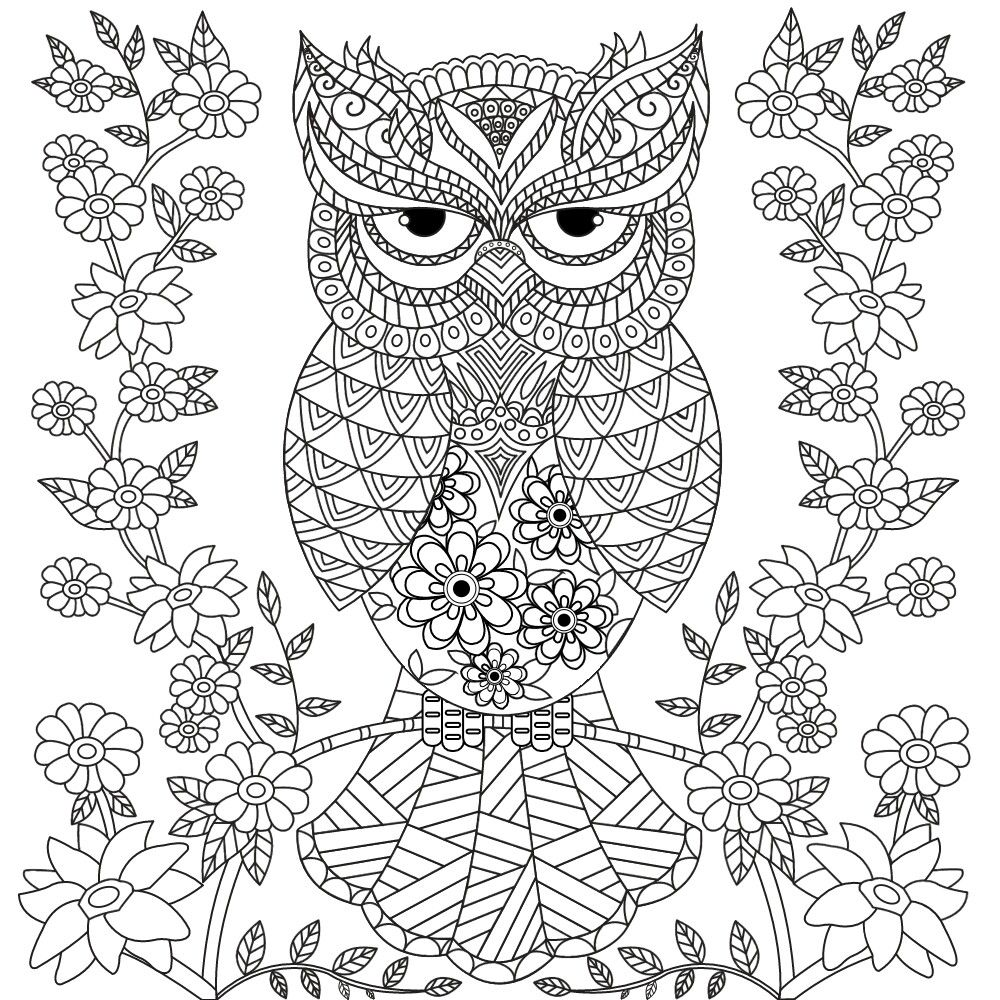 owl coloring page para colorir e pintar coloring and painting