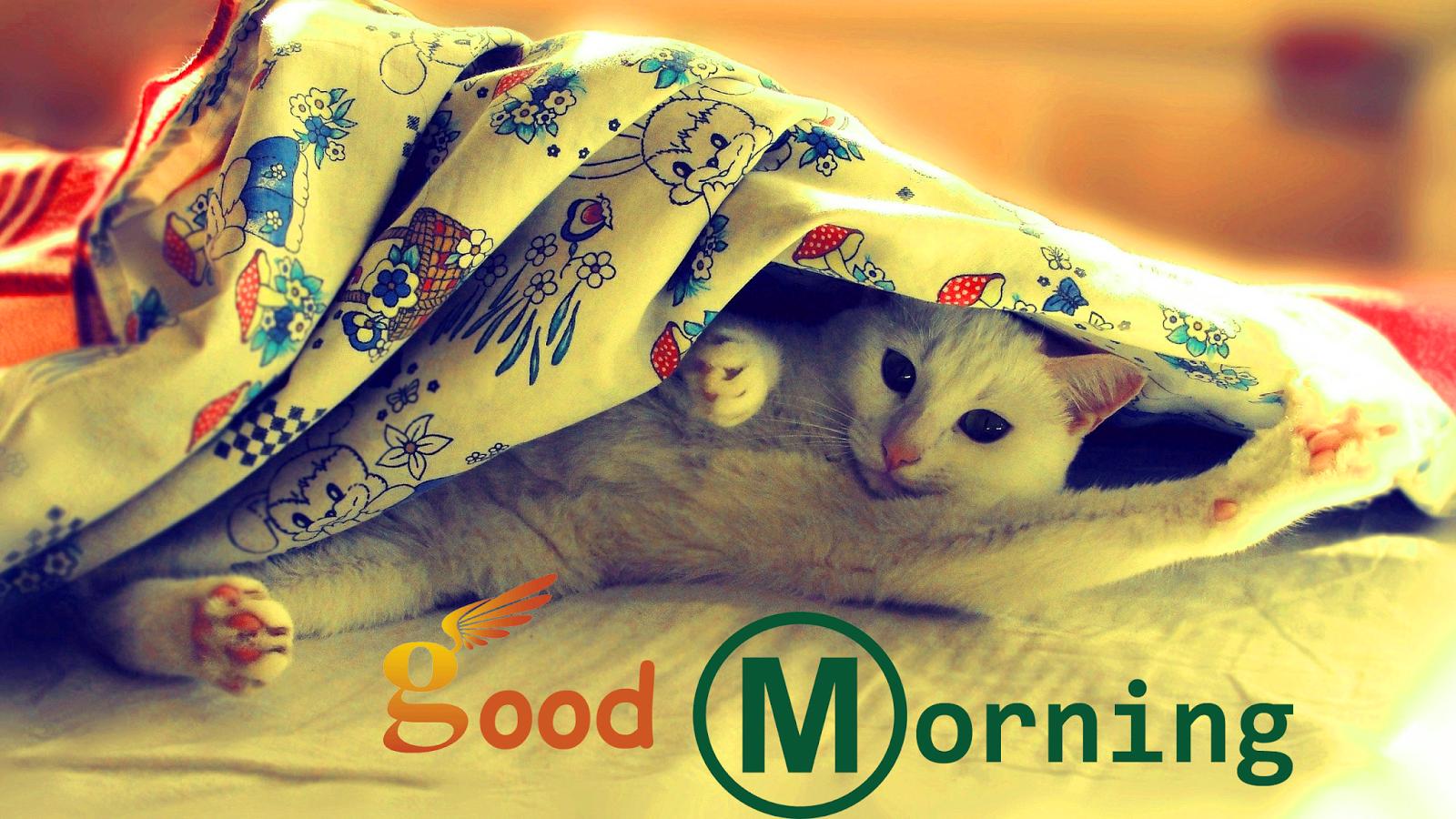 Hd wallpaper good morning - Good Morning Cat Hd Wallpaper