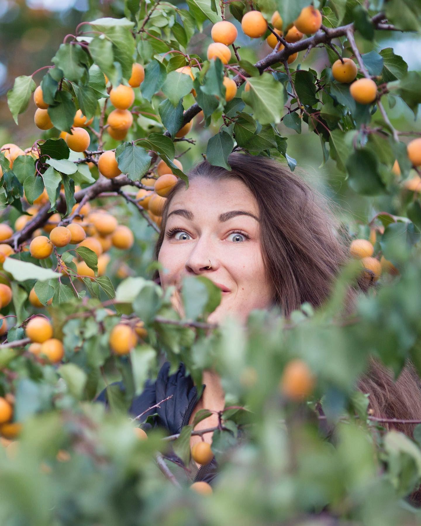 Apricots Orchid   Misgar, Hunza Valley   Rosie Gabrielle   @rosiegabrielle