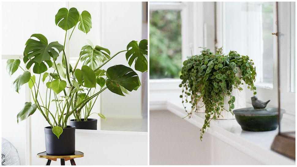 No need to make room on your windowsill for these ...