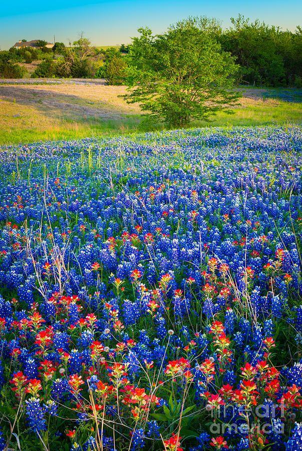 Carpet by Inge Johnsson Wild flowers, Blue