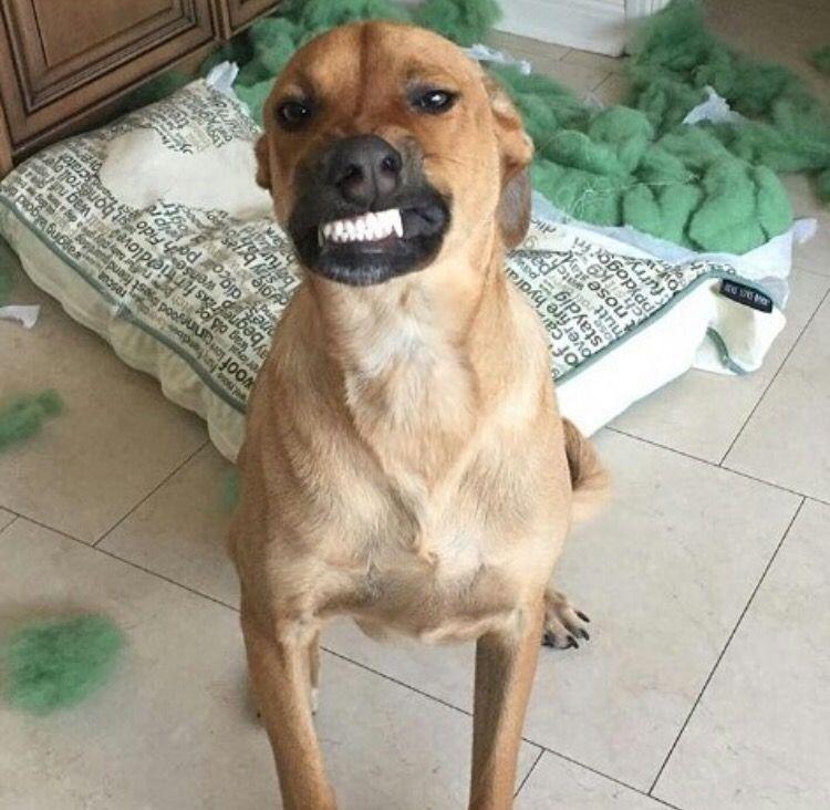 Most Inspiring Mouth Cur Black Adorable Dog - c811cca40d16633d1f1f665ab75daea0  Image_469497  .jpg