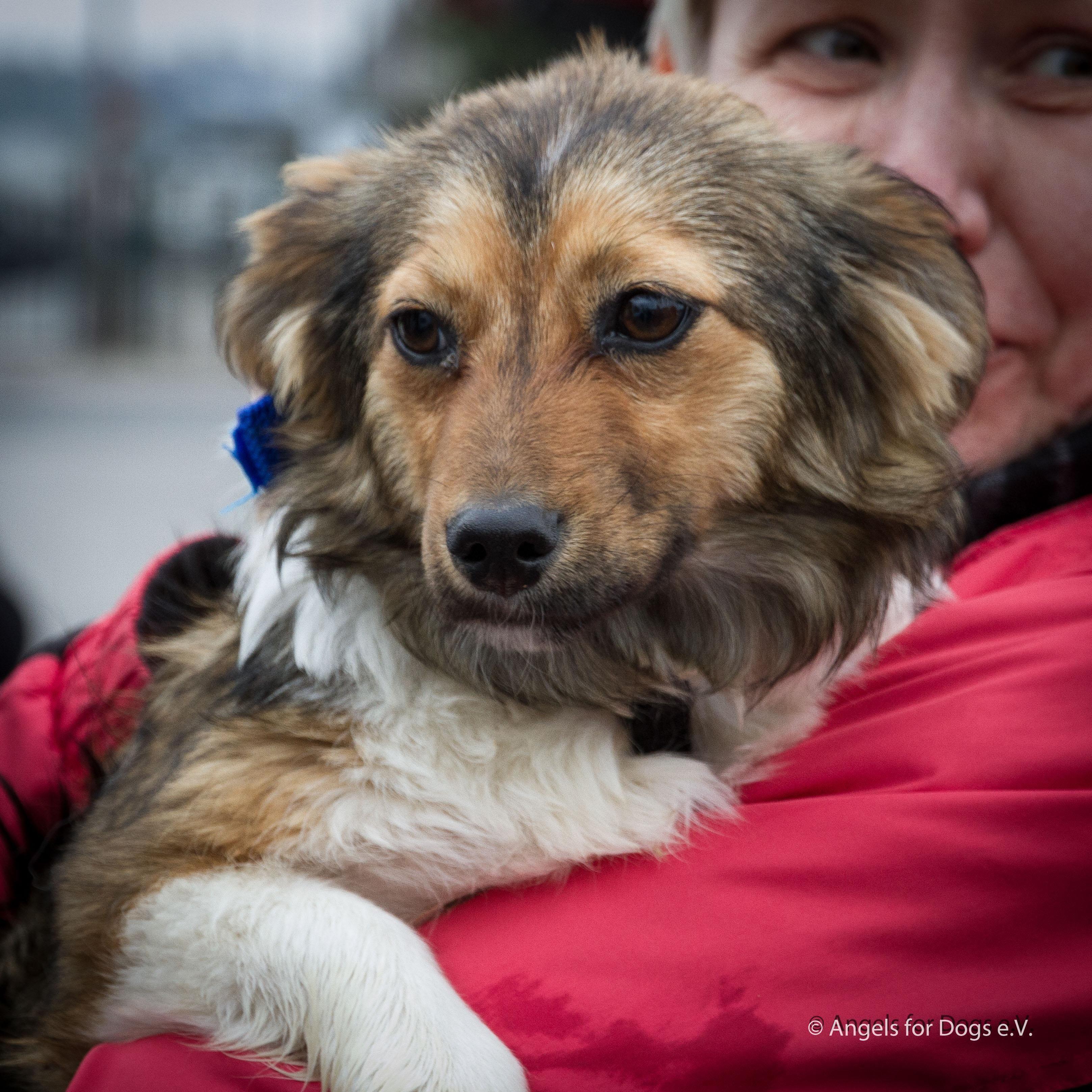 Hund Mischling Mischling Hundin 10 Monate In Bendorf