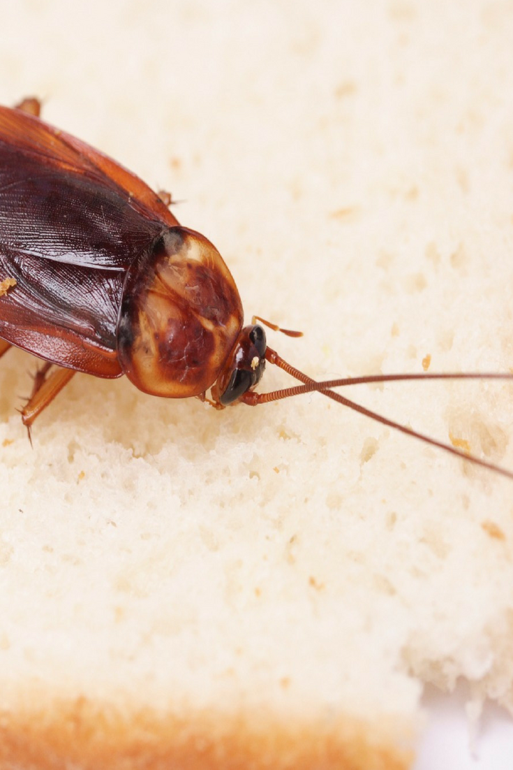 The best advice for kitchen cockroach control is to practice good ...