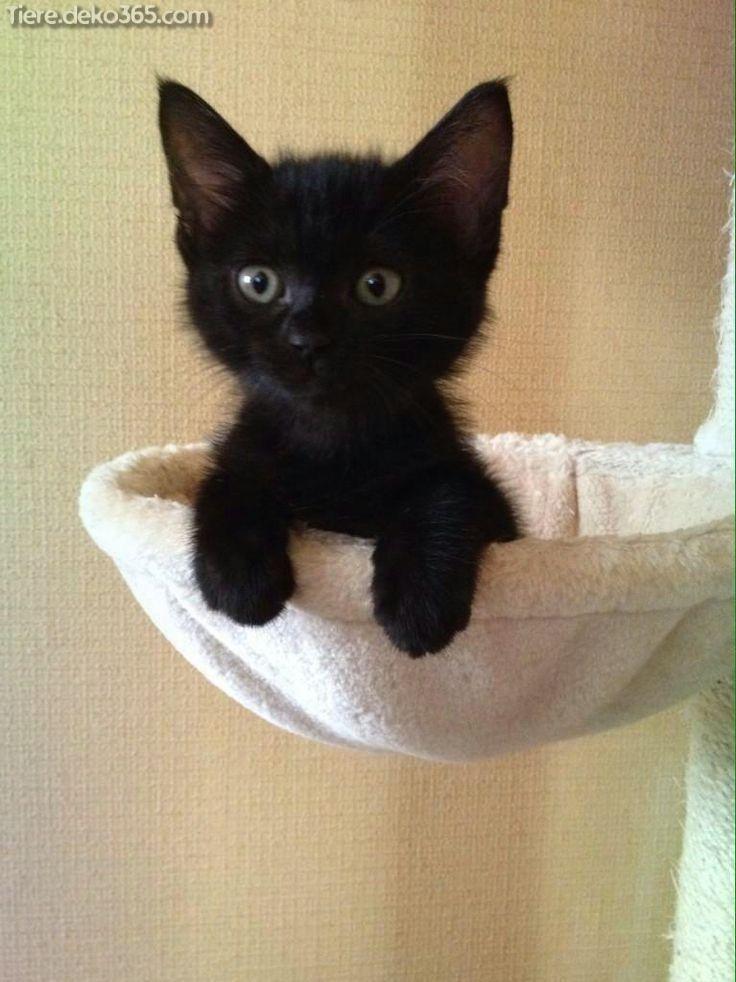 Ausgezeichnet niedlichste Katzen und Kätzchen #funnykittens
