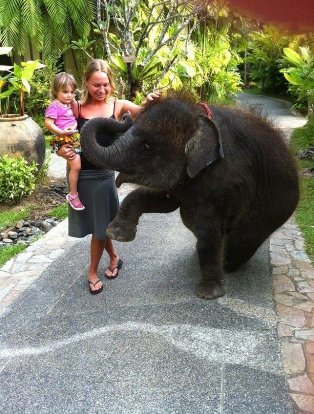 Baby elephant & her humans   F๏r thє ᶫᵒᵛᵉ ๏f pєts   Baby ...