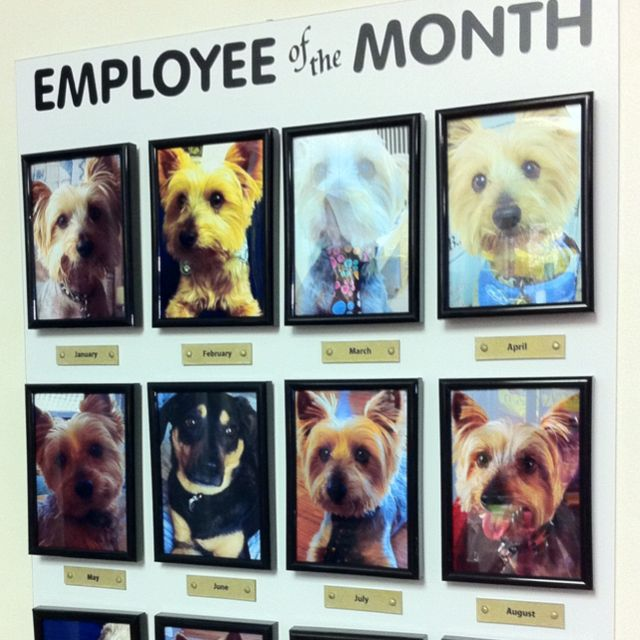 Repinned What A Fun Idea Dog Employee Of The Month Board Dog Daycare Dog Business Dog Grooming Shop